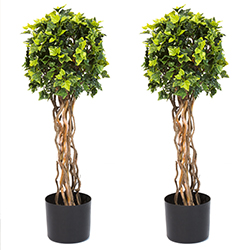 30 Inch English Ivy Single Ball Topiary Tree - Set of 2 Image