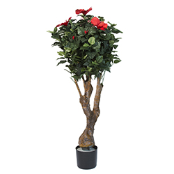 48 Inch Hibiscus Tree with Flowers Image