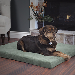 PETMAKER 3 inch Foam Pet Bed-25.5x19 inches-Forest