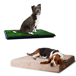 PETMAKER Large Foam Dog Bed and Puppy Potty Trainer Set