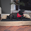 PETMAKER Orthopedic Memory Foam Pet Bed - XL