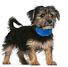 PETMAKER Cooling Pet Collar Up to 8 inches Blue