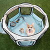 Portable Pop Up Pet Play Pen with carrying bag 38in diameter 24in Blue by PETMAKER