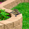 Turtle Statue-Resin Zen Animal Figurine for Outdoor Lawn and Garden D�cor-Great for Flower Beds, Fairy Gardens, Backyards and More by Pure Garden