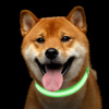 LED Medium Dog Collar-Lights Up for Night Visibility and Safety- Adjustable, Rechargeable, 3 Flash Modes-For Evening Walks or Runs by Petmaker (Green)