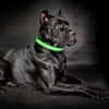 LED XL Dog Collar-Lights Up for Night Visibility and Safety- Adjustable, Rechargeable, 3 Flash Modes-For Evening Walks or Runs by Petmaker (Green)