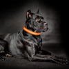 LED XL Dog Collar-Lights Up for Night Visibility and Safety- Adjustable, Rechargeable, 3 Flash Modes-For Evening Walks or Runs by Petmaker (Orange)