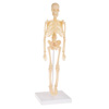 Human Skeleton Model Kit on Base- 13.25? Kids Skeletal Model with Realistic Looking Bones and Movement for Learning Science, Anatomy by Hey! Play!