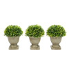 Artificial Podocarpus Grass Plant in Concrete Pot- Round Set of 3, 7.5? Decorative Faux Indoor  Ornamental Potted Topiary by Pure Garden