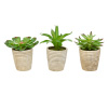 Faux Succulents ? Assorted Lifelike Plastic Greenery Arrangements in Decorative Vases for Indoor Home or Office D�cor by Pure Garden (Set of 3)