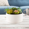 Assorted Faux Succulents- Artificial Mini Plant Arrangement in White Glazed Ceramic Pot, Lifelike Greenery for Home & Office Decoration by Pure Garden