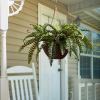 Faux Boston Fern ? Hanging Natural and Lifelike Artificial Arrangement and Imitation Greenery with Basket for Home or Office D�cor by Pure Garden