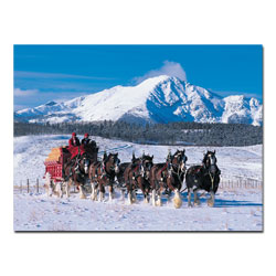 Clydesdales in Snow Covered Mountains - 24 x 32Canvas