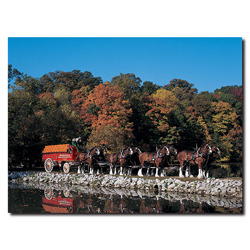 Clydesdales in Fall by Stone Pond- 18 x 24 Canvas