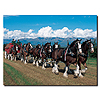 Clydesdales in Blue Sky Mountains - 18 x 24 Canvas