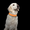 LED Large Dog Collar-Lights Up for Night Visibility and Safety- Adjustable, Rechargeable, 3 Flash Modes-For Evening Walks or Runs by Petmaker (Orange)