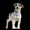 LED XS Dog Collar-Lights Up for Night Visibility and Safety- Adjustable, Rechargeable, 3 Flash Modes-For Evening Walks or Runs by Petmaker (Blue)