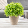 Artificial Boxwood Topiary- 9? Round Potted Ornamental Greenery for Indoor Use, Realistic PE Plastic Shrub, Home and Office Decoration by Pure Garden