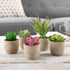 Faux Succulents ? Assorted Lifelike Plastic Greenery Arrangements in Stone Look Pots for Indoor Home or Office D�cor by Pure Garden (Set of 5)