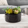Assorted Faux Succulents- Artificial Mini Plant Arrangement in Black Glazed Ceramic Pot, Lifelike Greenery for Home & Office Decoration by Pure Garden