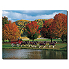 Clydesdales - Fall by a Pond - 18 x 24 Canvas