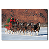 Clydesdales in Snow with Carriage & Xmas Tree - 16x24 Canvas