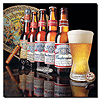 Budweiser - 5 Generations of Bottles -  Canvas 18 x 18 Inch